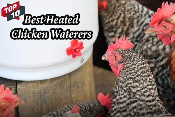 Best Heated Chicken Waterers