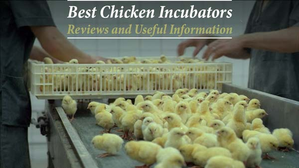 Top 10 Best Chicken Egg Incubators For 2019 – Reviews and Useful Information