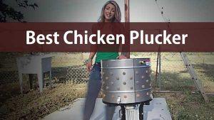 Best Chicken Plucker