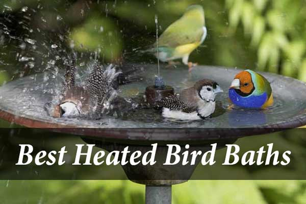 Top 10 Best Heated Bird Baths For 2019 – Reviews and Buying Guide
