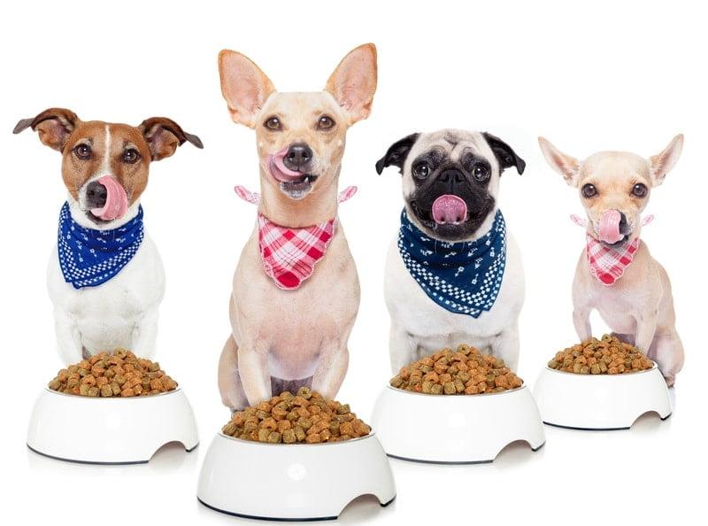 carrageenan in dog food