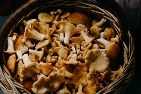 Taking a Close Look at the Most Common Edible Mushrooms