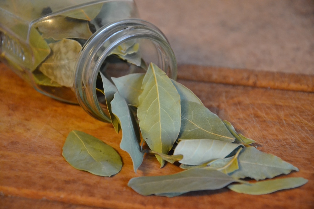 curry leaves substitute bay leaves
