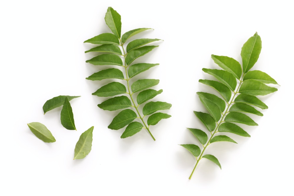 replacement for curry leaves